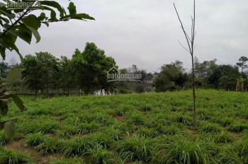 Gia đình cần bán 2500 m2 đất trong khu nông trường Việt Mông thuộc xã Yên Bài, huyện Ba Vì