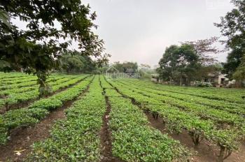 Bán 1212m đất tại Yên Bình - Thạch Thất - Hà Nội.LH 0985372926