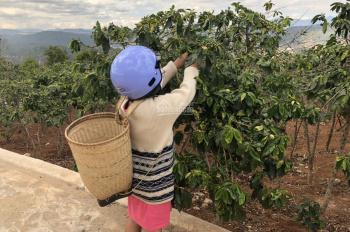 Cần bán 500m đất vườn cà phê Vạn Thành, view đẹp nhất