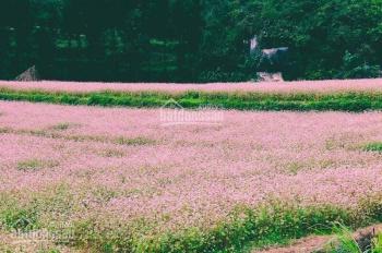 Bán nhanh lô đất Bảo Lộc chính chủ - 250tr
