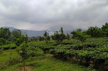 Đất hồ Đồng Mô - gia đình cần bán 2500m2 đất nghỉ dưỡng tại hồ Đồng Mô, Xã Yên Bài, Ba Vì, Hà Nội