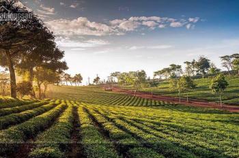 Đất sổ đỏ mặt tiền Lý Thái Tổ, TP. Bảo Lộc 4.5tr/m2, DT 5x20m, 5x25m