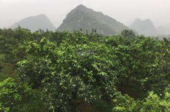Bán lô đất 6ha đã trồng cam tại huyện Lương Sơn tỉnh Hòa Bình