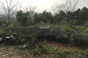 Chính chủ bán lô đất 10.000m2 trong đó có 400m2 nhà ở tại xã Yên Bài Ba Vì Hà Nội. LH 0985678566