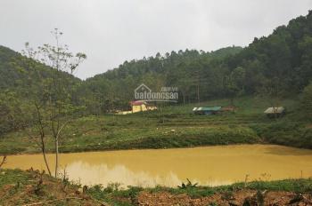 Cần bán 210ha đất đang trồng keo tại Đà Bắc