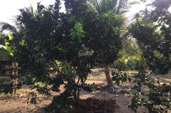 Bán trang trại bưởi + dừa hơn 40.000 m2 khu vực đang phát triển ở Nha Trang