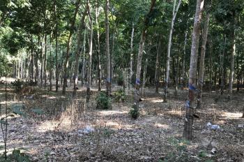Bán đất An Bình - Phú Giáo - BD. DT: 9400m2 (9,4 sào) giá còn thương lượng