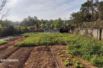 Bán đất có sổ đỏ giá rẻ tại thị trấn Xuân Mai - Chương Mỹ - Hà Nội có 100m2 đất ở