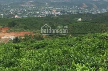Bán đất vườn TP Bảo Lộc, tỉnh Lâm Đồng