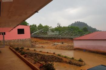 Chính chủ cần chuyển nhượng khu vực trồng hoa công nghệ cao - Lâm Đồng