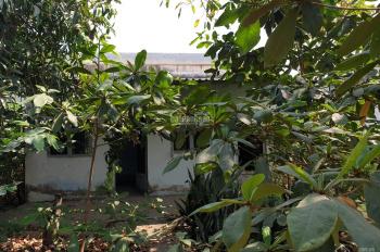 Nhà đất thổ cư ngay cổng phà Bình Khánh, Cần Giờ