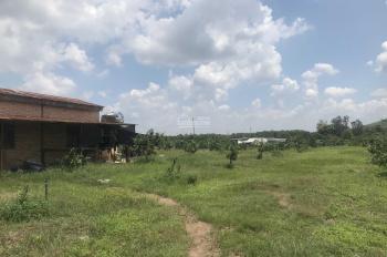 Bán gấp 2.2ha và 4.3ha (thổ cư 300m2) vườn bưởi và ổi đang cho thu hoạch Xuân Đông Cẩm Mỹ, Đồng Nai