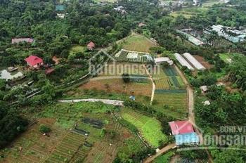 Bán trang trại 10.000m2 tại Lương Sơn, Hòa Bình, vị trí hiếm, kinh doanh đỉnh chỉ 6 tỷ