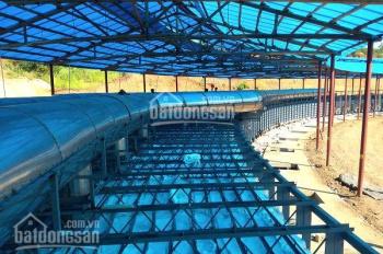 Khủng hoảng kinh tế chuyển nhượng nhà máy gạch Lò Vòng Yên Định, Thanh Hoá