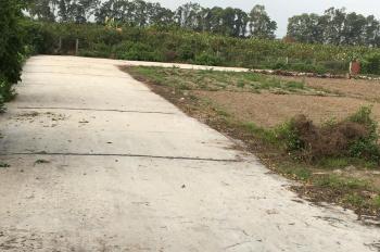 Bán đất đấu giá thôn Đồng Tỉnh - Nghĩa Trụ - Văn Giang - Hưng Yên