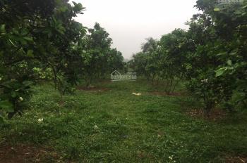 Gia đình cần bán gấp mảnh đất ở Yên Bài - Ba Vì - Hà Nội