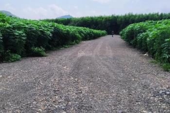 Bán đất thị trấn Phước Bửu, Xuyên Mộc, Bà Rịa - Vũng Tàu Hơn 600m2