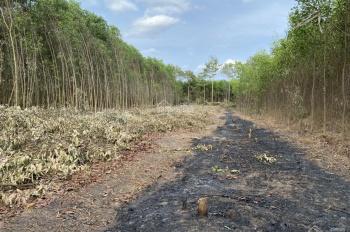 Bán gấp lô đất đẹp nở hậu xã Long Phước, đối diện sân bay để giải quyết công việc, LH: 0938581921