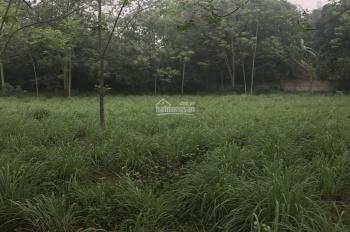 Chính chủ cần bán mảnh đất 2000m2 có 400m2 đất ở cách thị trấn Lương Sơn 500m