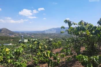 7 ha view đỉnh núi, thích hợp kinh doanh du lịch, sản xuất nông nghiệp sạch