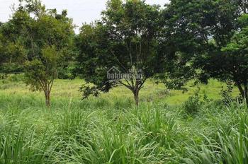 Cực hiếm và rẻ 5400m2 có suối giá chỉ 1,6 tỷ ở Lương Sơn, Hòa Bình, LH 0948.035.862.62