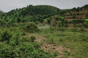 Bán nhanh 2HA đất tại huyện Lương Sơn Hoà Bình