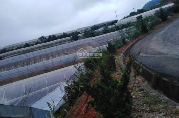 Cần bán gấp lô đất giá rẻ tại Lạc Dương, 768m2, giá chỉ 2.5 tr/m2