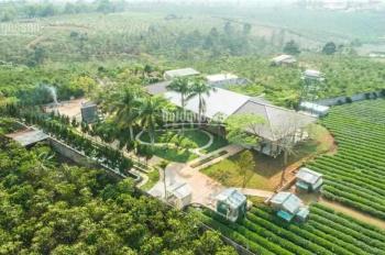 Bán siêu biệt thự + vườn trà Ô Long 1,4 hecta