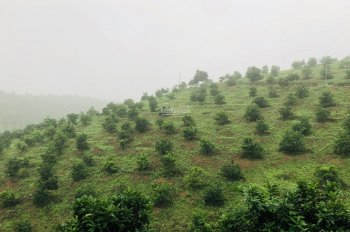 Bán trang trại 21ha trồng cây ăn quả và lấy gỗ, tại Lương Sơn, Hòa Bình, giá 17,9 tỷ