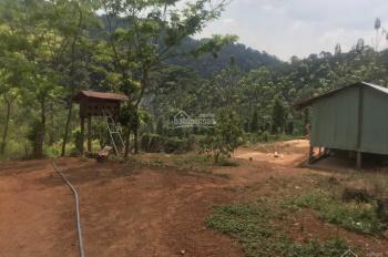Bán đất rẫy 2ha - 3ha xã Măng Cành, Kon Tum.