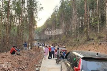 Bán đất rừng sản xuất 165tr/10.000m2, đã có sổ đỏ riêng công chứng trong ngày