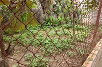 Chính chủ cần bán 46m2 đất tại Cổ Bi, Gia Lâm giá rẻ