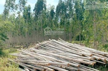 Bán đất rừng sản xuất từ 5-100ha, đất thuộc quyền sở hữu của dân, sổ đỏ, ở Bắc Kạn, LH 0764583637