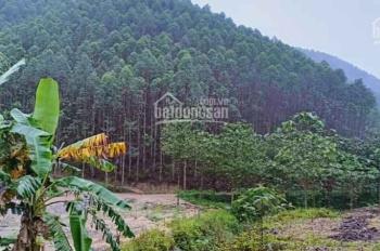 Bán đất rừng sản xuất 100tr/10.000m2(1ha). Sổ đỏ riêng, đường xe tải