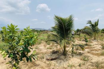 Kẹt tiền bán gấp lô đất có vườn trái cây giáp Sông Cái Diên Đồng với giá rẻ. Lh: 0982497979 Ms Vy