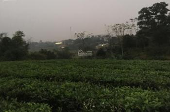 Em cần bán lô đất 1000m2 tại Yên Bài, Ba Vì, HN