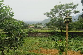 Cần chuyển nhượng lô đất 2500m2 vị trí đắc địa giá siêu hấp dẫn tại xã Liên Sơn, Lương Sơn, HB
