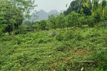 Chính chủ cần bán lô đất 2500m2 vị trí đắc địa giá siêu hấp dẫn tại xã Liên Sơn, Lương Sơn, HB
