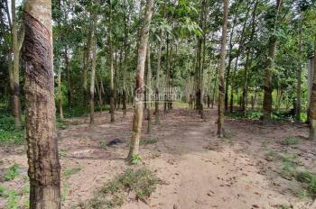 Bán đất làm xưởng DT=18x115=2064m2, thổ cư 900m, xã Phan Văn Cội, Củ Chi