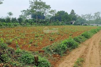 Bán 1,5 ha đất thổ cư + đất vườn vị trí Cư Yên, Lương Sơn, Hòa Bình
