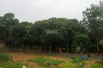 Lô đất làm homestay, nghỉ dưỡng cuối tuần tại xã Hòa Sơn, Lương Sơn