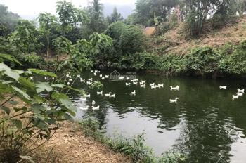 Cần bán gấp 7260m2 có sẵn nhà cấp 4, ao cá và 500 gốc bưởi diễn đang thu hoạch tại Lương Sơn, HB