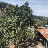 Cần bán 2000m2 đất nông nghiệp ngoại ô TP.Đà Lạt. View trên đồi cao cực đẹp - yên tĩnh - trong lành