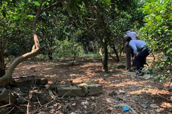 Nhượng lại mảnh đất diện tích 513m2 tại xóm Đồng Sẽ, xã Nhuận Trạch, Lương Sơn, Hòa Bình