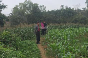 Bán đất Minh Quang lưng tựa núi Tản, mặt quay sông Đà 4,5 ha, giá 100k/m2