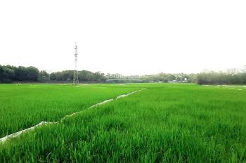 Mảnh đất giáp và view toàn bộ cánh đồng lúa tuyệt đẹp nhìn toàn cảnh dự án Legacy
