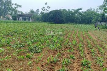 Bán gấp đất thổ cư vuông vắn bằng phẳng, tại Lương Sơn, Hòa Bình, diện tích 5450m2