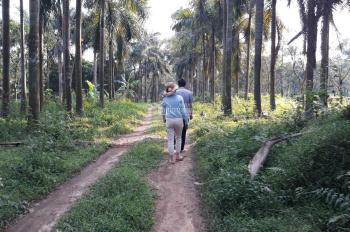 Cần chuyển nhượng 48.000m2 (4.8ha) đất 50 năm xây khu nghỉ dưỡng tại Tam Dương Vĩnh Phúc, 097252508