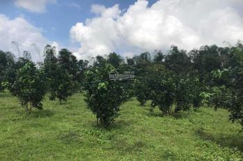 Bán đất trồng cây lâu năm, có 400m2 đất ở