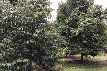6 sào vườn trái cây ấp 2, xã Bình Lộc, TP Long Khánh